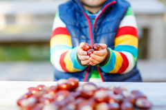 Kleines blondes Kind, das mit Kastanien im Herbstpark spielt Stockfotografie