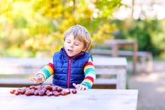 Kleines blondes Kind, das mit Kastanien im Herbstpark spielt Lizenzfreie Stockfotos