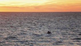 Kleines Boot auf Meerwasser Sonnenuntergang Sommer Langsame Bewegung Schiffswrack stock video footage