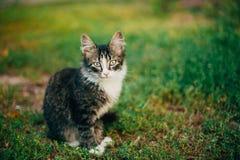 Kleines Cat Kitten Sitting On Green Spring-Gras Stockbilder