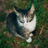 Kleines Cat Kitten Sitting On Green Spring-Gras Lizenzfreie Stockfotos
