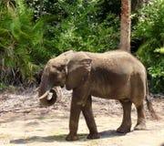 Kleines Elefant-Baby, wild lebende Tiere, Säugetiere Stockbild