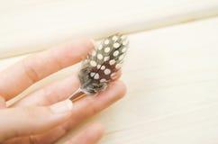 Kleines FederPerlhuhn in der Hand auf weißem Hintergrund Lizenzfreie Stockfotos