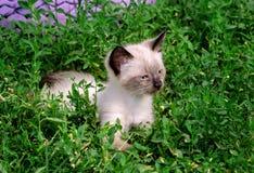 Kleines flaumiges Kätzchen stockbilder