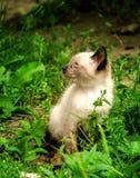 Kleines flaumiges Kätzchen lizenzfreies stockbild