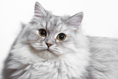 Kleines flaumiges Kätzchen Lizenzfreie Stockbilder