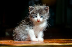 Kleines gähnendes Kätzchen Stockfotografie