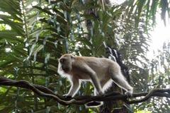 Kleines Geld, das auf einem Baum sitzt und spielt Lizenzfreie Stockfotografie