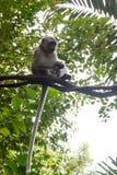 Kleines Geld, das auf einem Baum sitzt und spielt Stockbilder