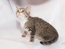 Kleines gestreiftes Kätzchen, das oben schaut Stockbild