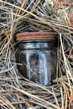 Kleines Glas, das in Kiefern-Nadeln 1 sich versteckt stockbilder