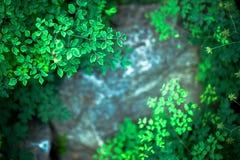 Kleines Grün verlässt auf einem Hintergrund von Steinen Stockfoto