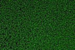 kleines Grün verlässt (Entengrützelemna) Lizenzfreies Stockfoto