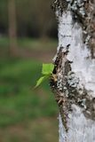 Kleines grünes Blatt auf dem Baum Stockbild