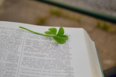 Kleines grünes Kleeblatt zwischen den Buchseiten Lizenzfreies Stockfoto