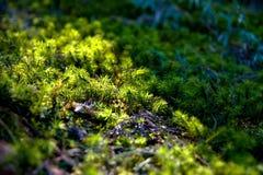 Kleines Gras Lizenzfreie Stockfotografie
