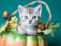 Kleines graues gestreiftes Kätzchen, das in einem Kürbiskorb sitzt Lizenzfreie Stockfotografie