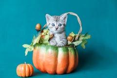 Kleines graues gestreiftes Kätzchen, das in einem Kürbiskorb sitzt Lizenzfreies Stockfoto