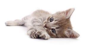Kleines graues Kätzchen Stockfotos