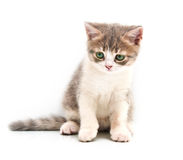 Kleines graues Kätzchen Lizenzfreie Stockfotografie