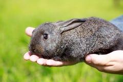 Kleines graues Kaninchen Stockfotos