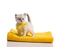 Kleines Kätzchen auf Tuch Stockfotografie
