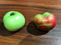 Kleines grenn und natürliche Äpfel stockfotografie