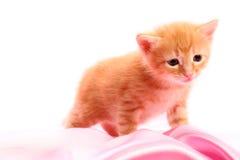 Kleines hübsches Kätzchen Lizenzfreie Stockfotos