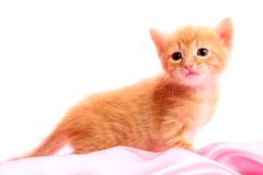 Kleines hübsches Kätzchen Stockfoto