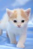Kleines hübsches Kätzchen Stockbilder