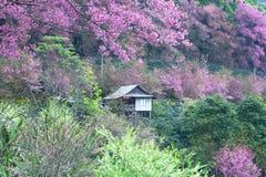 Kleines Haus im rosa Wald Stockbild