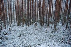 Kleines Haus im Schnee deckte Holz in den Schweizer Alpen ab Lizenzfreie Stockbilder