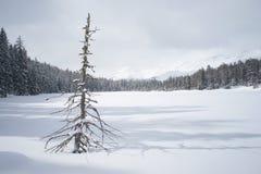 Kleines Haus im Schnee deckte Holz in den Schweizer Alpen ab Lizenzfreies Stockbild