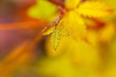 Kleines Herbstblatt auf unscharfem Hintergrund Stockbilder
