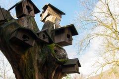 Kleines Holzhaus für Vögel auf Kiefer, Konzept - interessieren Sie sich für wilde Vögel Stockfoto
