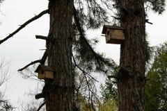 Kleines Holzhaus für Vögel auf Kiefer, Konzept - interessieren Sie sich für wilde Vögel Stockbilder