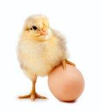 Kleines Huhn auf dem Ei. getrennt Lizenzfreie Stockbilder