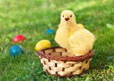 Kleines Huhn mit Eiern Lizenzfreies Stockbild