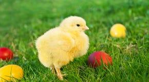 Kleines Huhn mit Eiern Lizenzfreie Stockfotografie