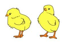 Kleines Huhn zwei Stockfoto
