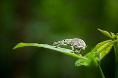 Kleines Insekt auf Blatt Lizenzfreie Stockfotos