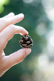 Kleines inspirierend magisches träumerisches Baby pinecone Stockbild