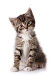 Kleines Kätzchen Stockbilder