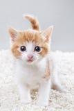 Kleines Kätzchen lizenzfreie stockfotos