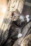 Kleines Kätzchen auf dem Baum Stockfoto