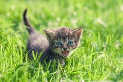 Kleines Kätzchen auf grünem Rasen stockbild