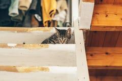 Kleines Kätzchen auf hölzerner Treppe nähern sich Decke Stockbild
