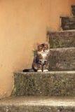 Kleines Kätzchen auf konkreter Treppe stockbilder