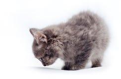 Kleines Kätzchen auf Weiß Stockfotografie