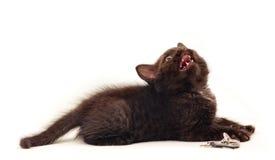 Kleines Kätzchen auf Weiß Stockbilder